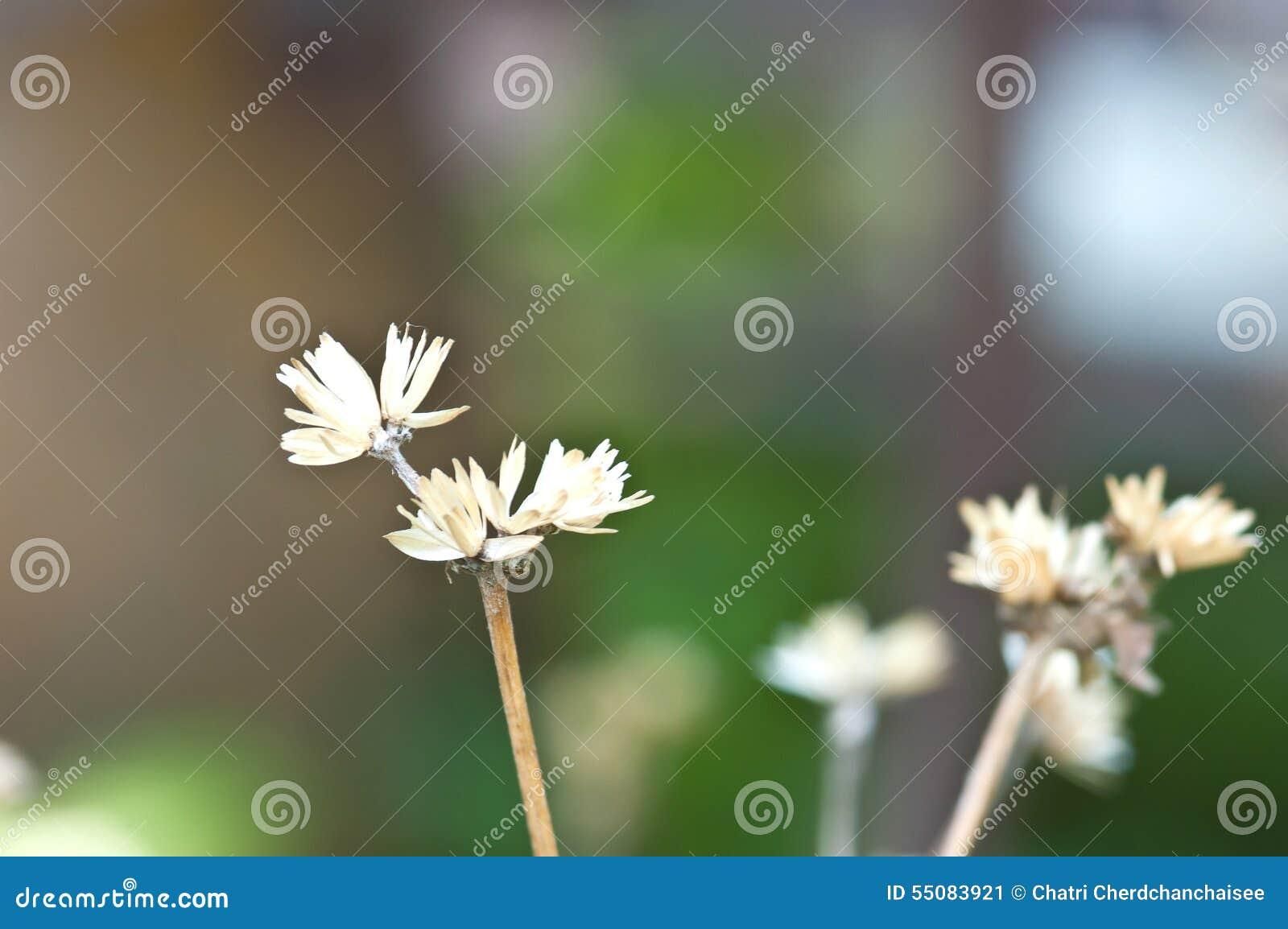 Droge bloem