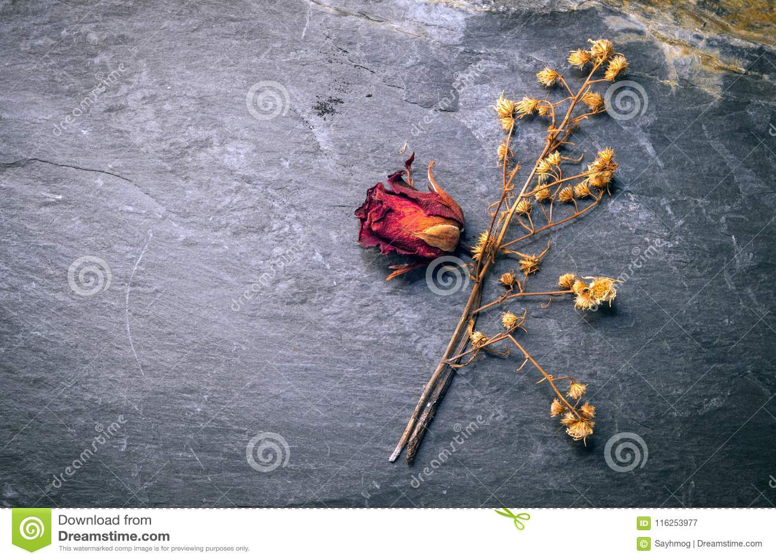 Droge Rose Flower op Steen