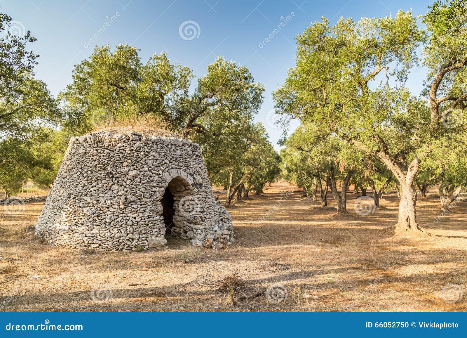 Droge steenhut met koepel in bosje van olijfbomen