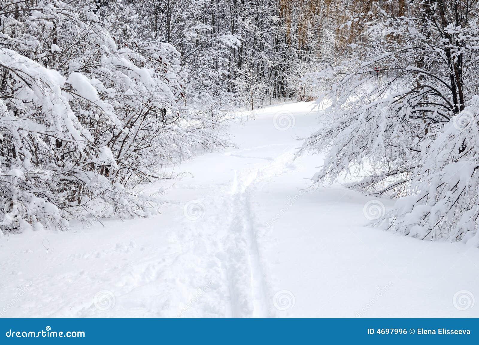 Drogi leśną zimy.