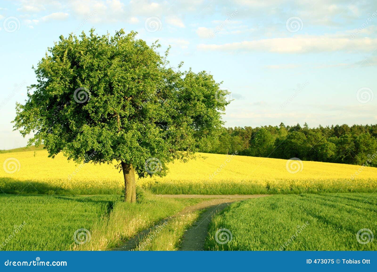 Drogi pola drzewa żółty