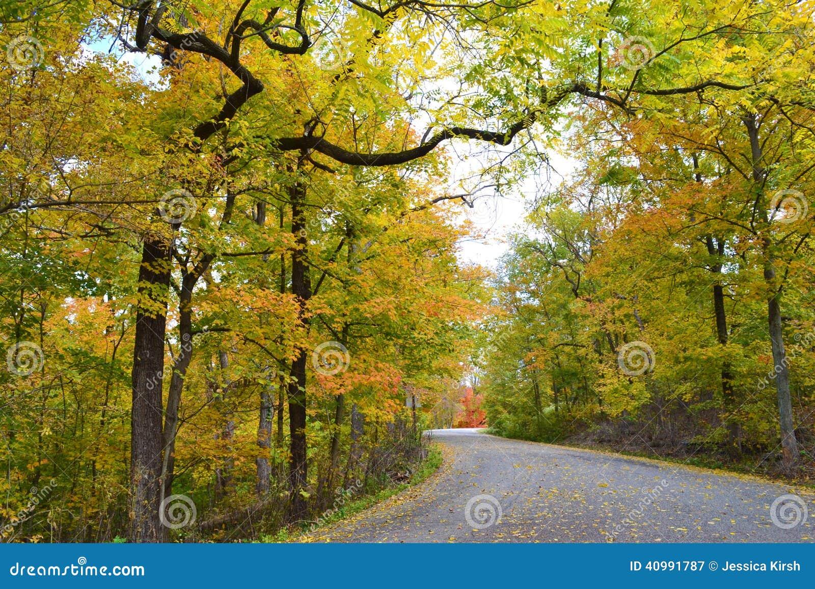 Drogowy cewienie przez lasu podczas sezonu jesiennego