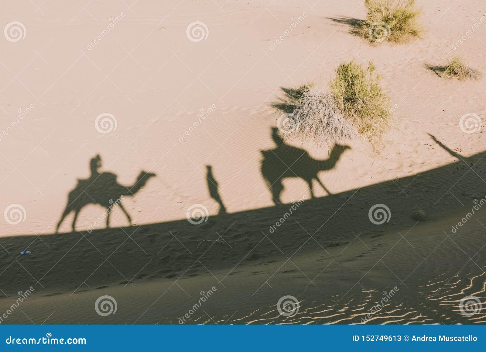 Dromedarschatten in der Wüste von Thar