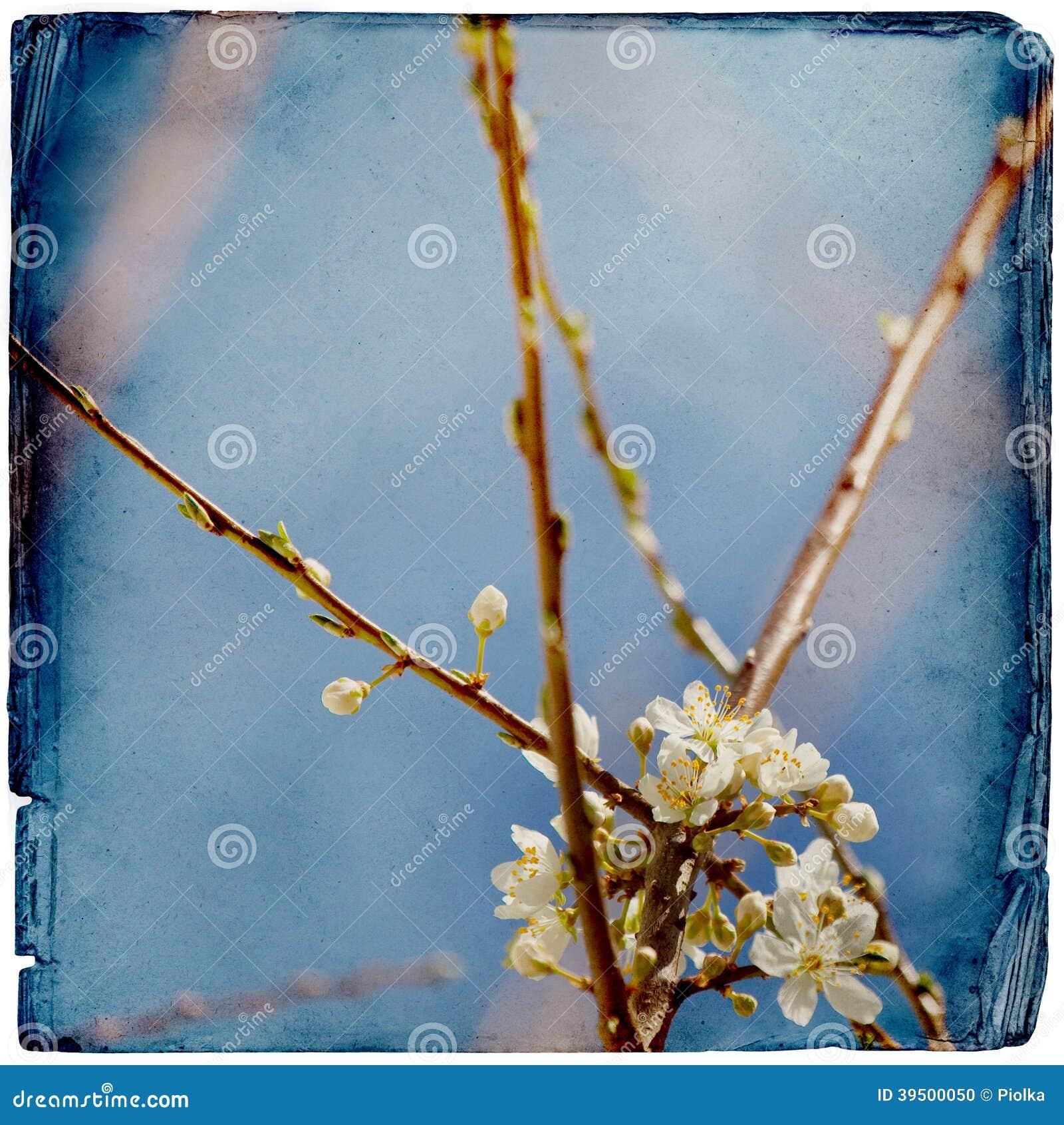 Dromerige springflowersachtergrond