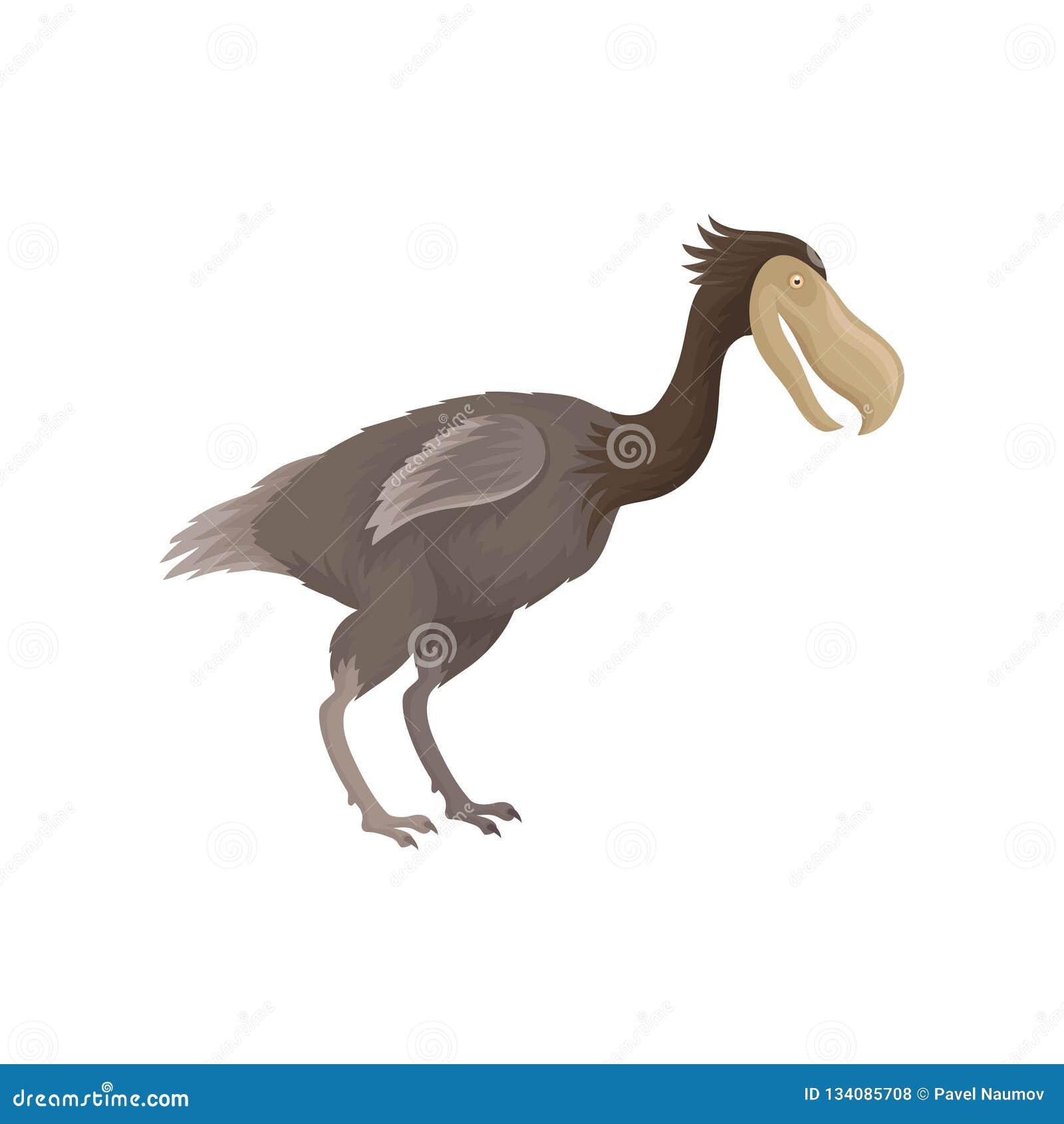 Drontfågel med små vingar och den stora näbb Slocknad varelse från istid Plan vektor för zoologibok