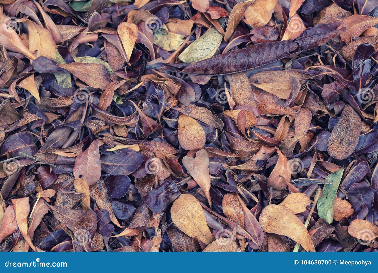 Download Droog bladeren in de tuin stock foto. Afbeelding bestaande uit bladeren - 104630700