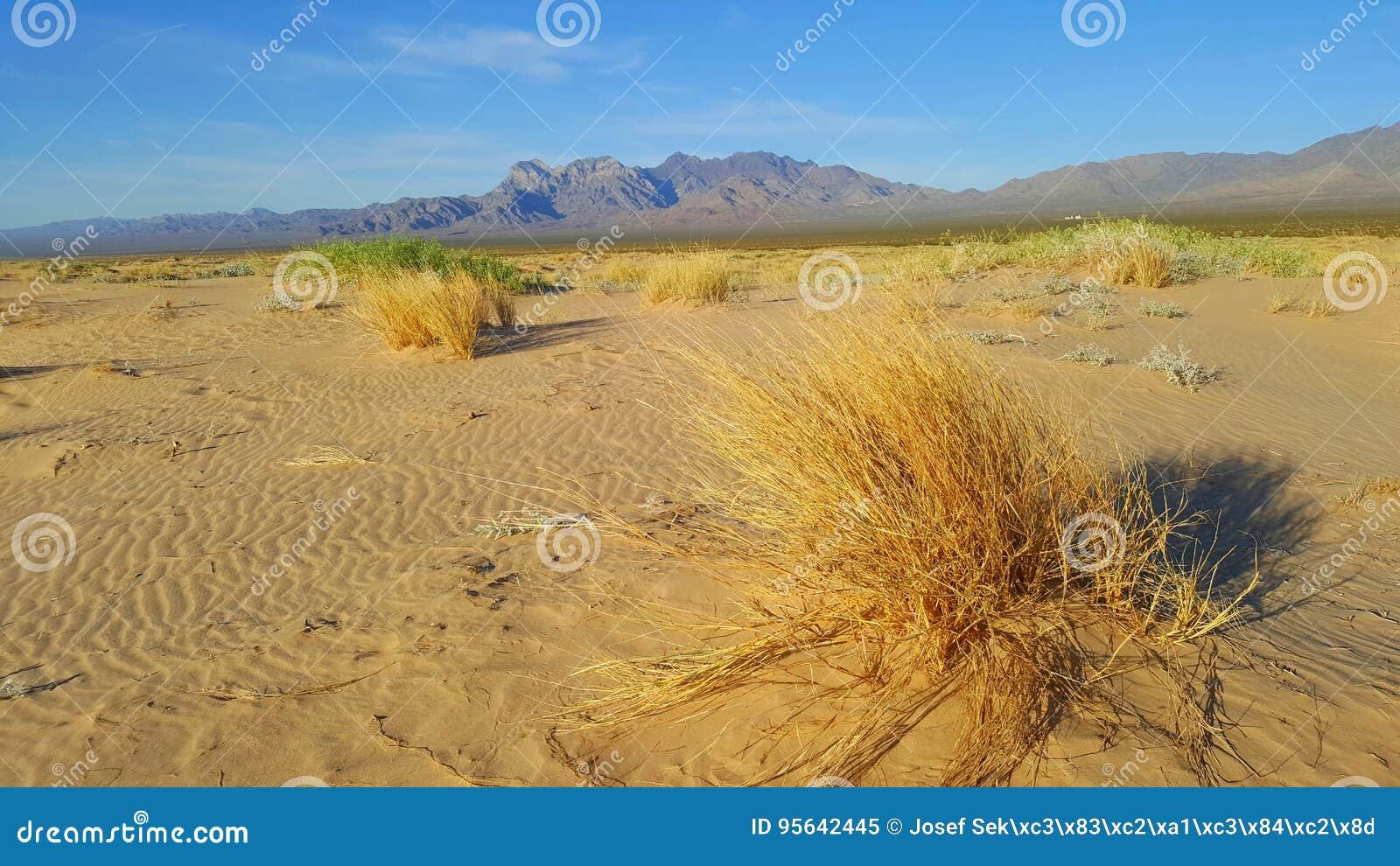 Droog gras in Mojave-woestijn met bergen op achtergrond en met duidelijke blauwe hemel