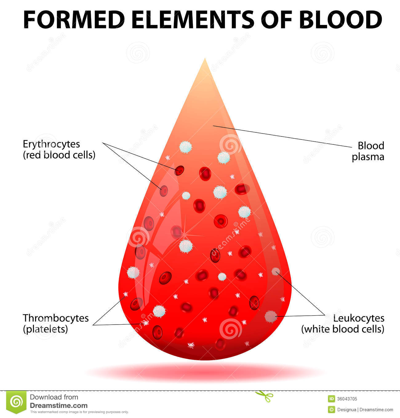 elements of blood diagram elements database wiring diagram blood plasma and formed elements in test tube stock photo image