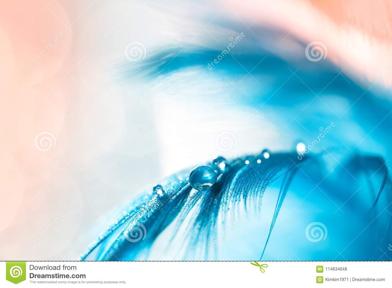 A drop on a blue feather, pastel coloring, pink background. Gentle beautiful macro, artistic image. Selective focus
