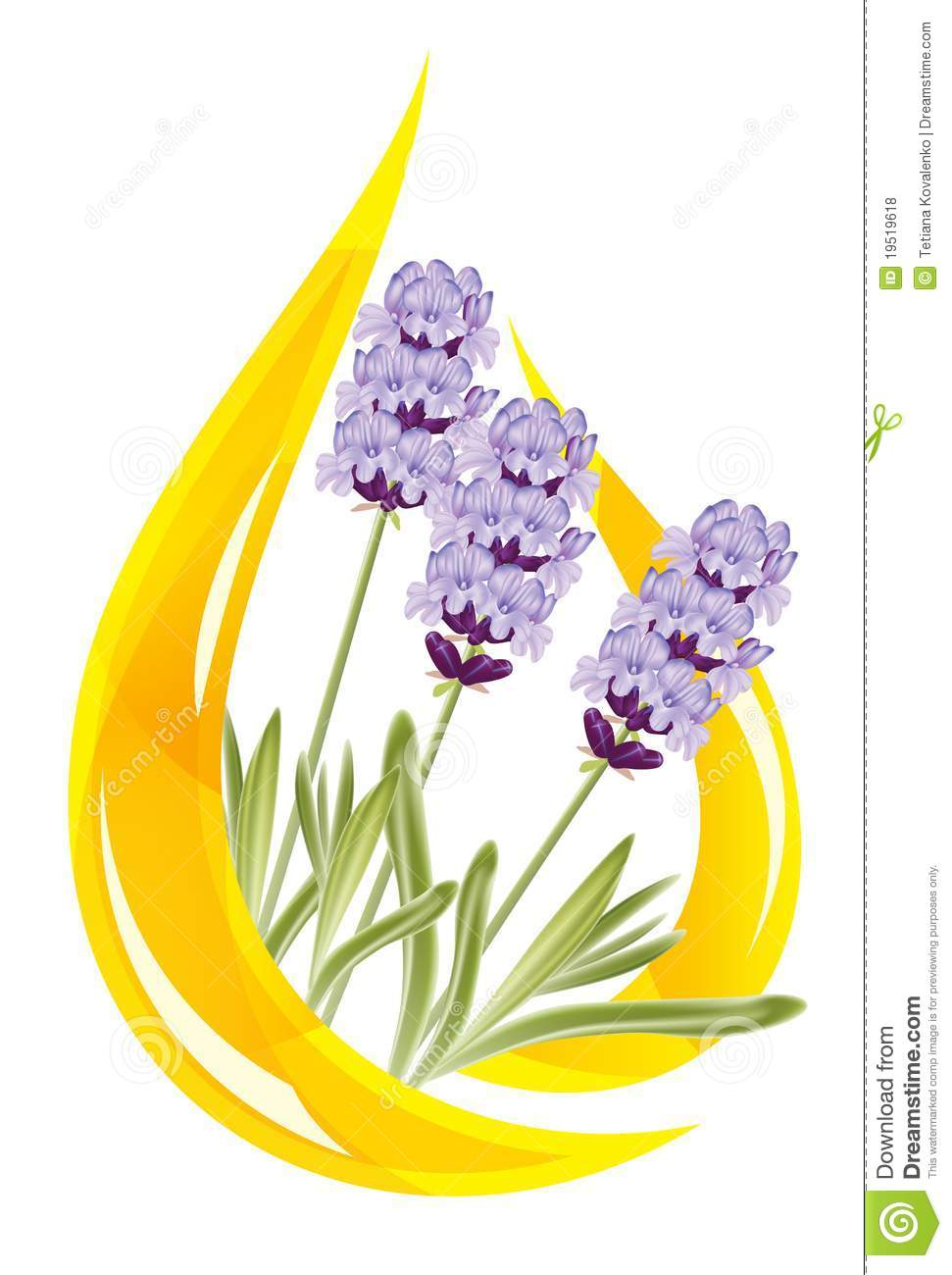 A Drop Of Lavender Essential Oil Royalty Free Stock