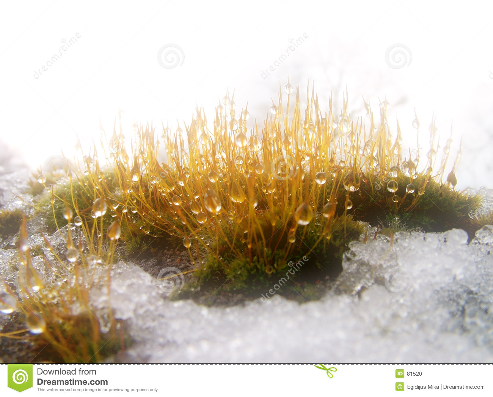 Drop plants snow