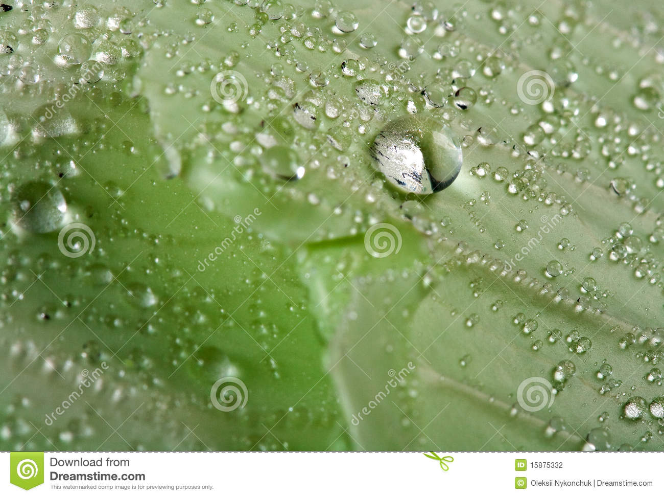 Stock Photography  Drop of water on leafWater Drop Photography On Leaf