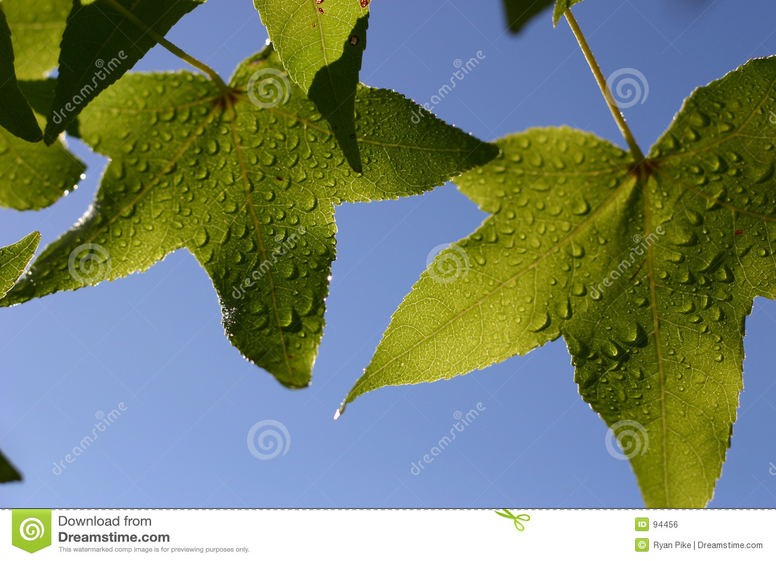 Droples φύλλα