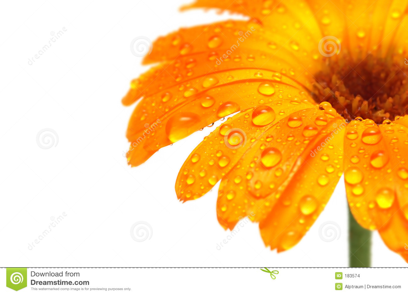 Droplets flower macro water