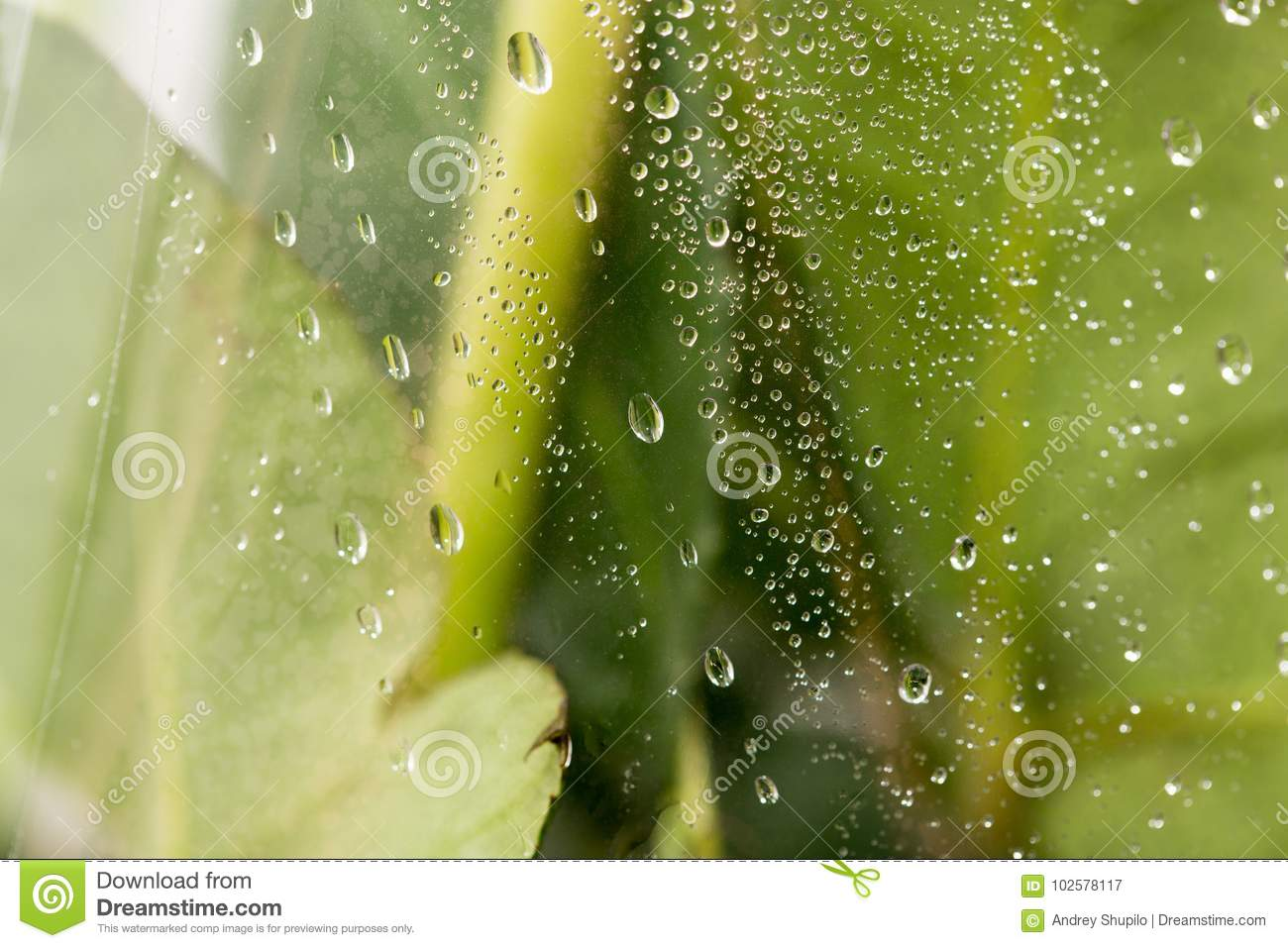 Drops On The Cellophane On Flowers Stock Image Image Of
