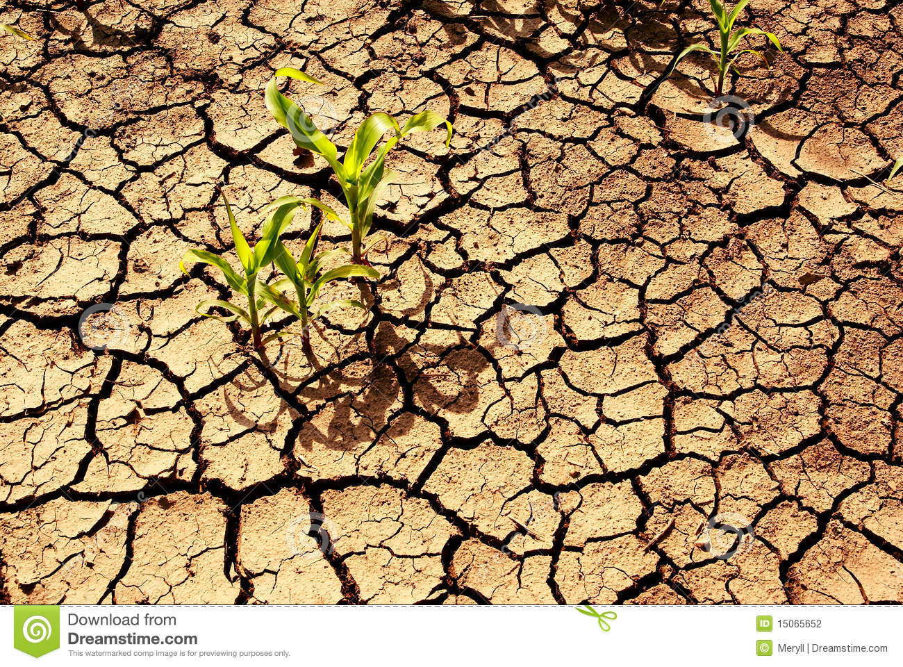 Drought, dry earth.