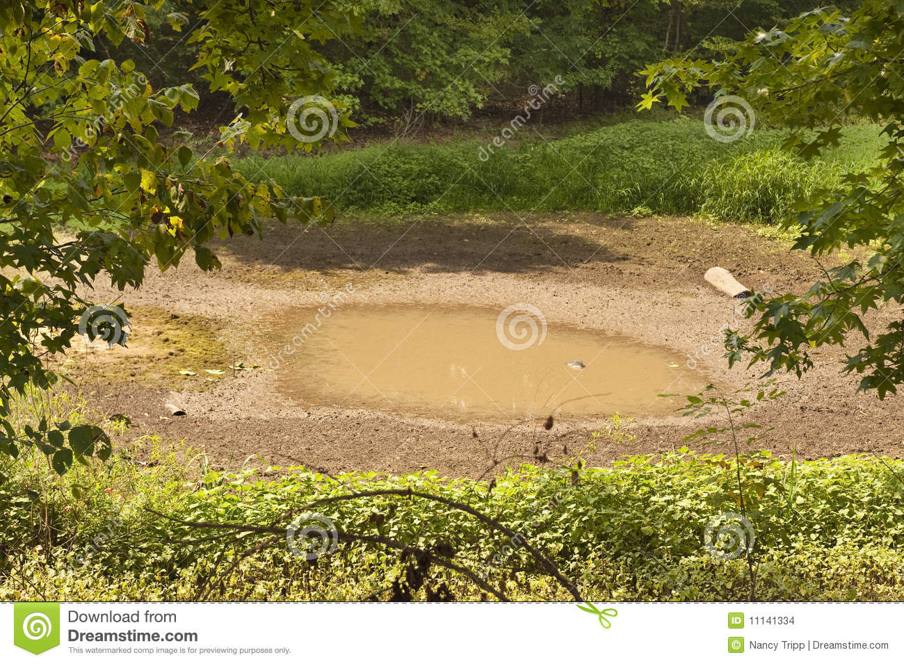 Drought pond stock photo 11141334 for Pond dealers
