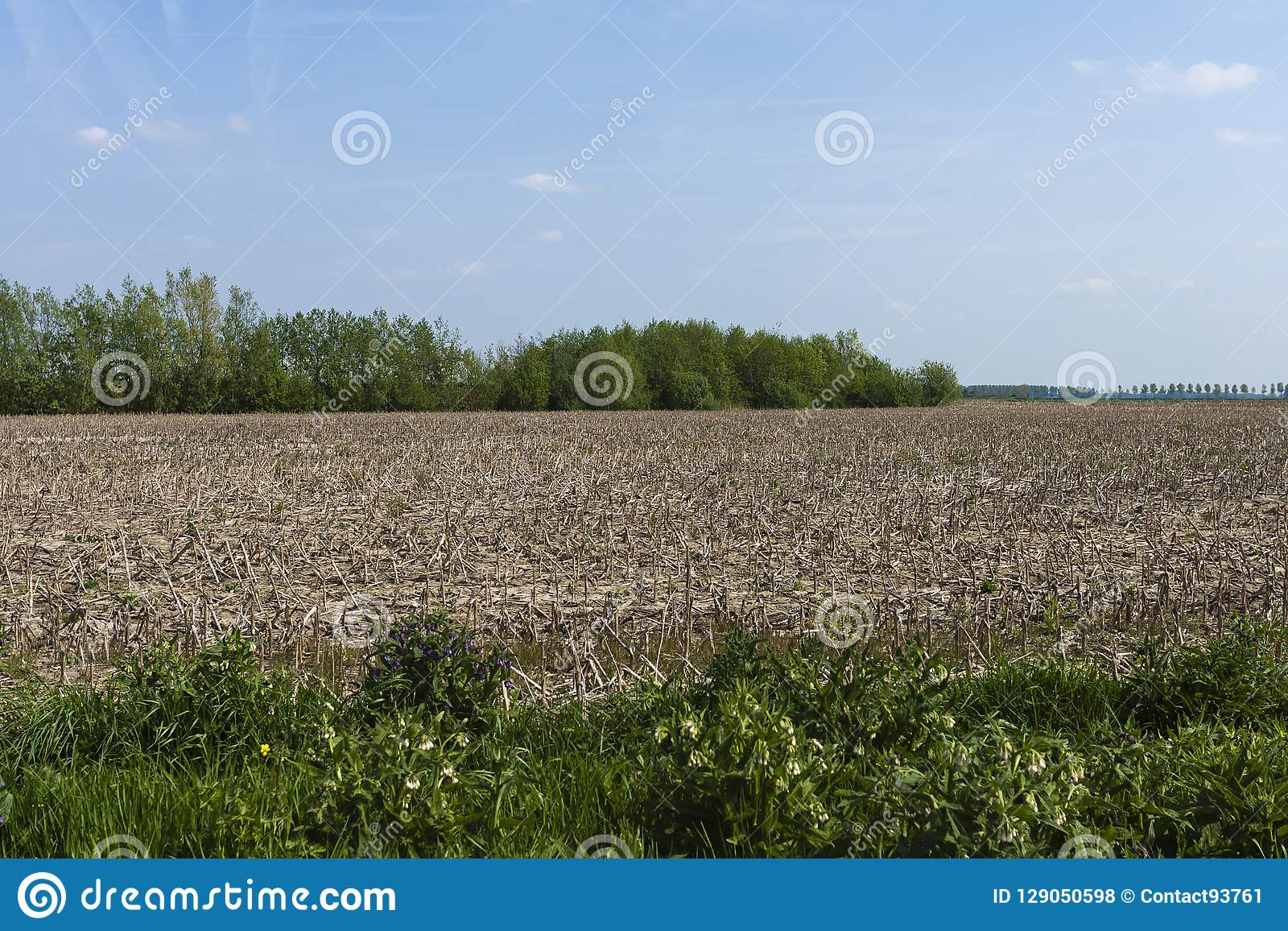 Drowned Land of Saeftinghe stock photo  Image of