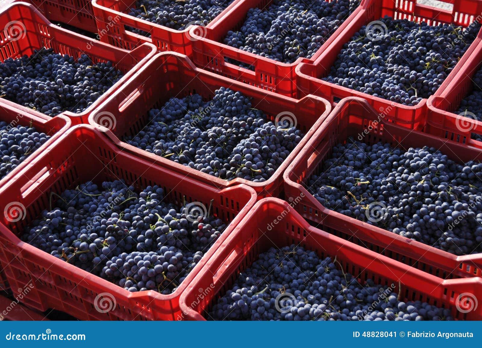 Druiven in manden