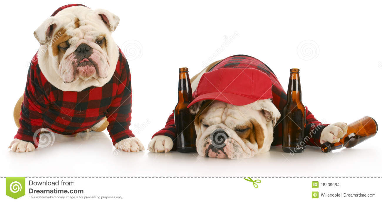 Drunk As A Dog Stock Images - Image: 18339084