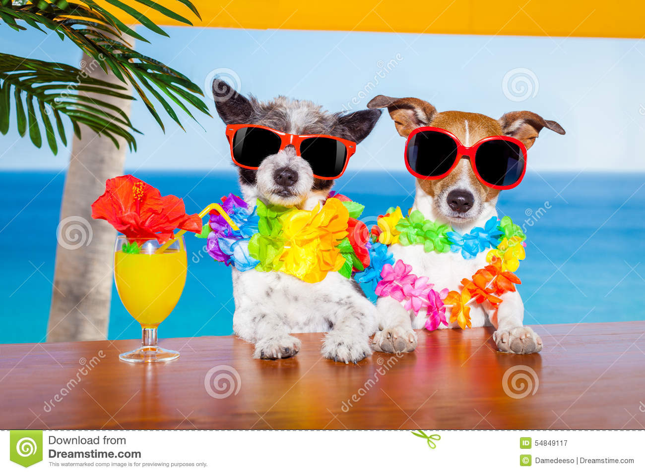 Drunk Cocktail Dogs Stock Photo Image 54849117