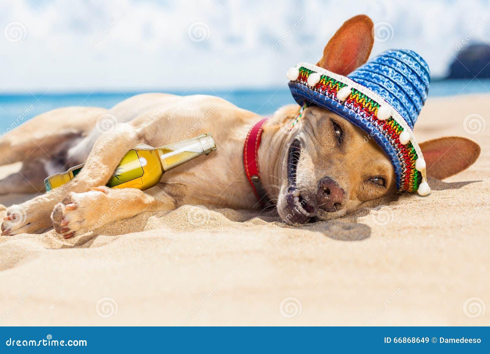 Ocean Beach Dogs