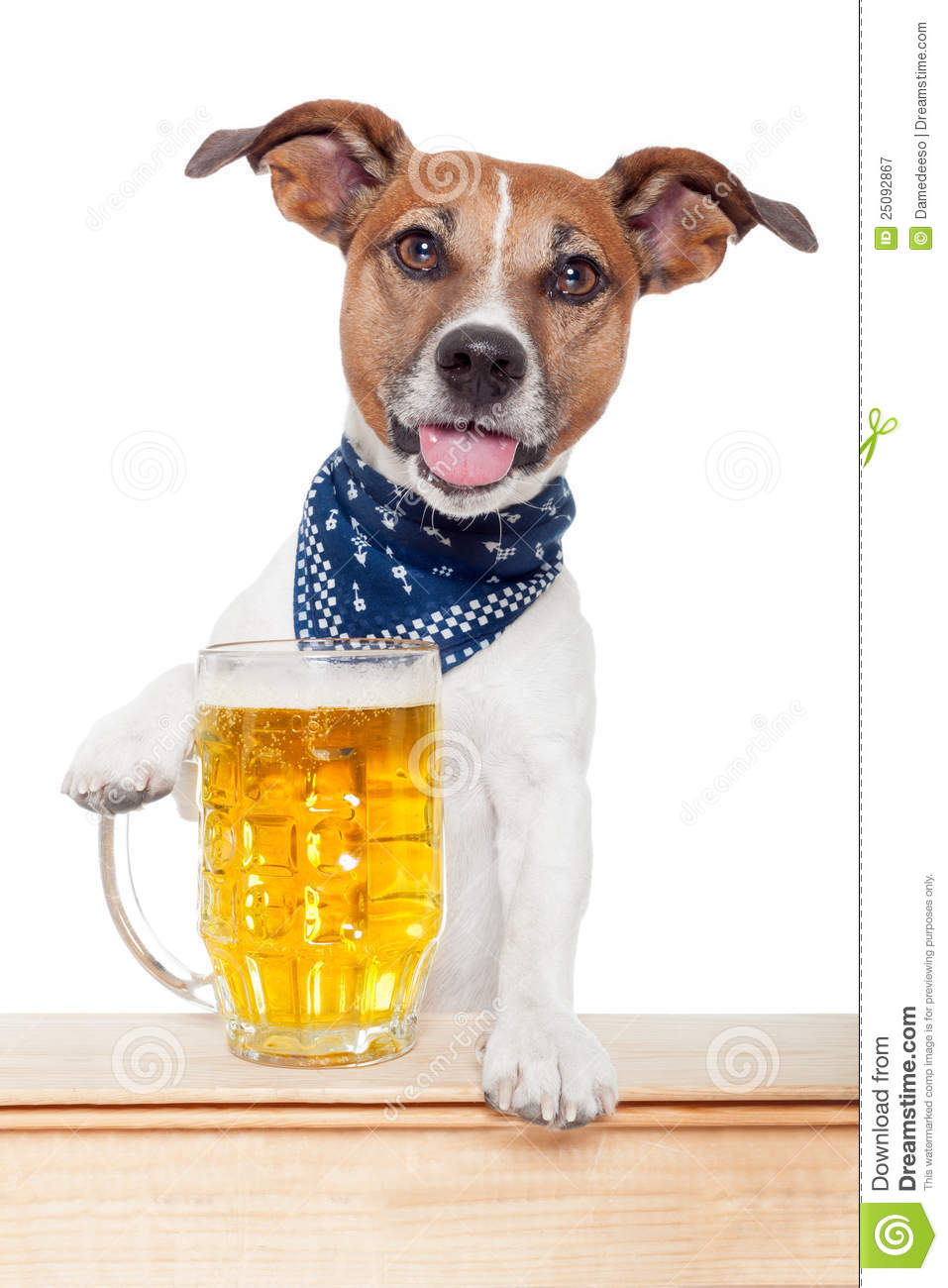 Drunk Dog With Beer Royalty Free Stock Photography - Image ...