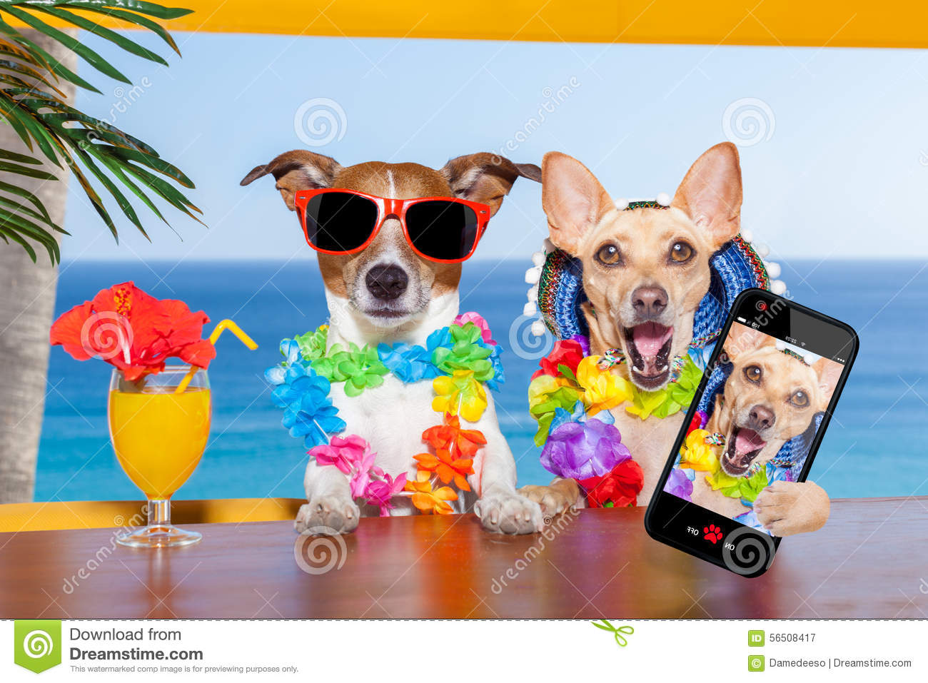 Drunk Dogs Stock Photo - Image: 56508417 Relaxing Dog Music Audio