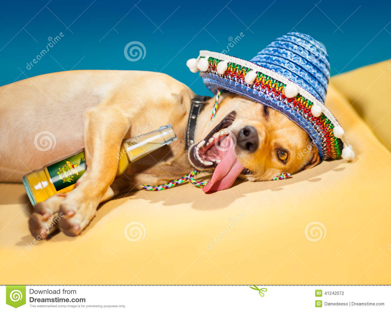 Drunk Dog Stock Photos