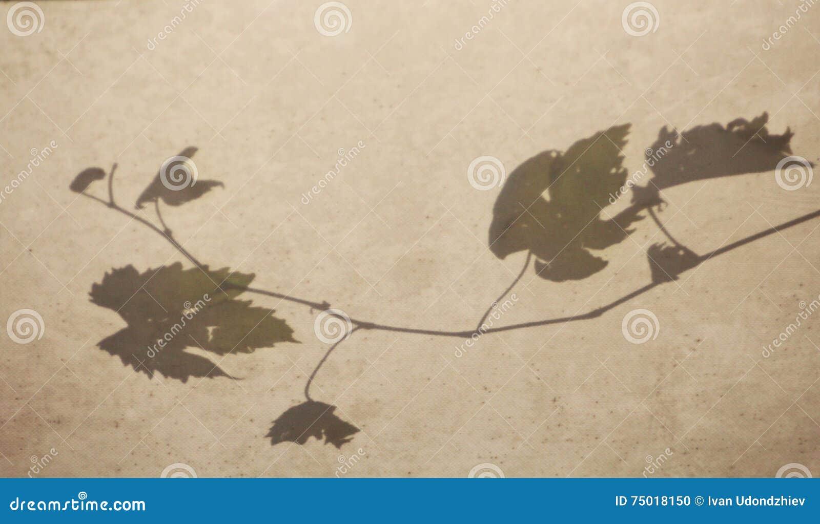 Druvaträd