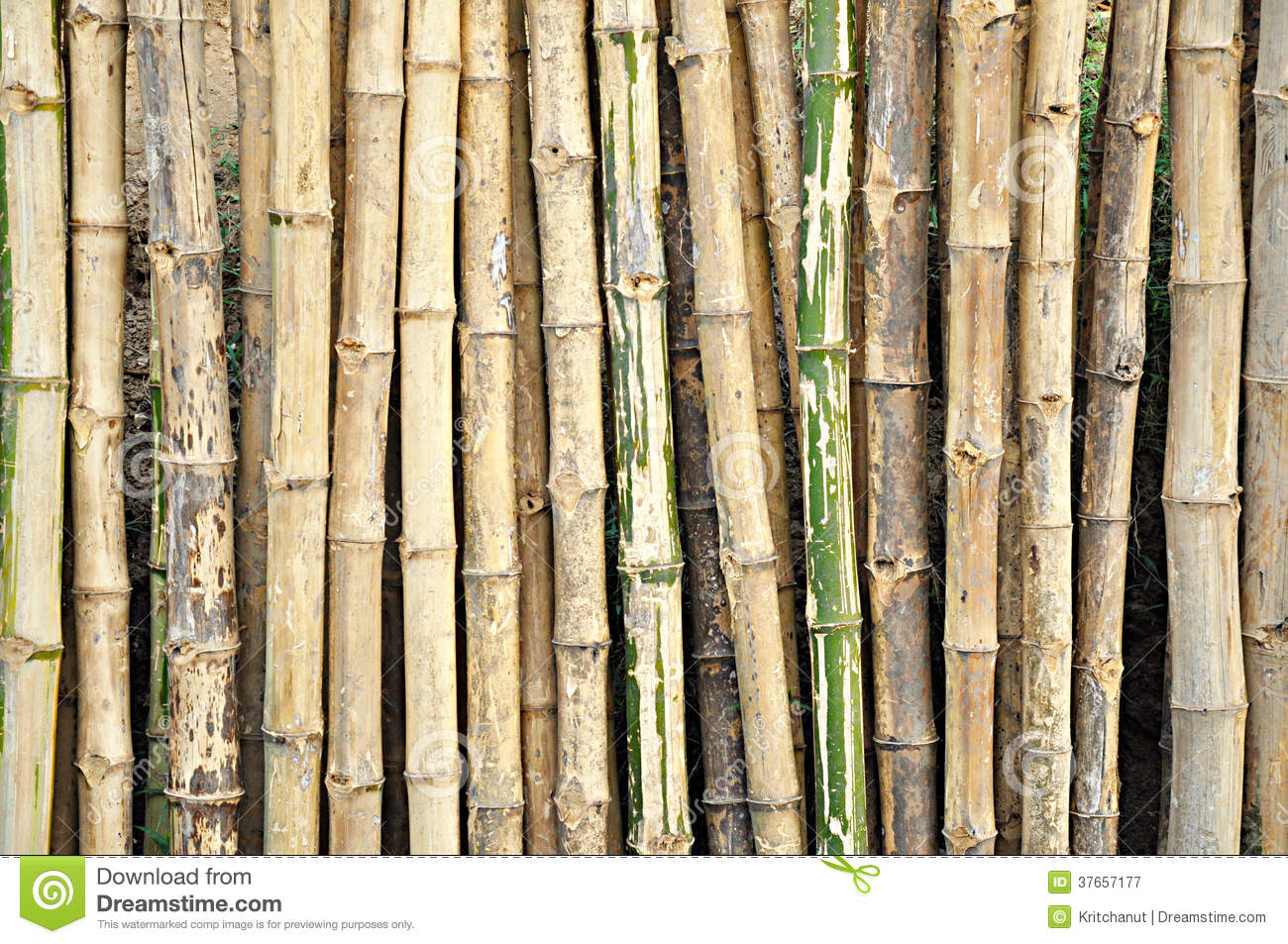 Artificial Bamboo Stalks ~ Dry bamboo stalks stock image of plant interior