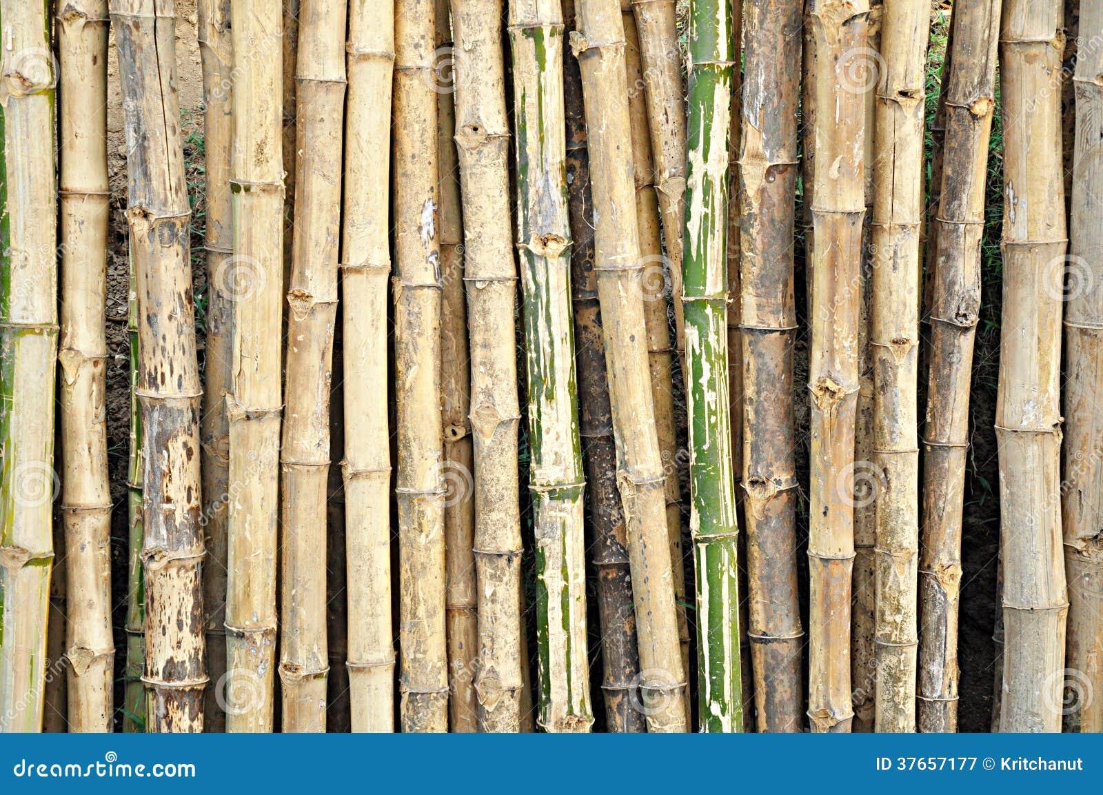Dry bamboo stalks stock image of plant interior