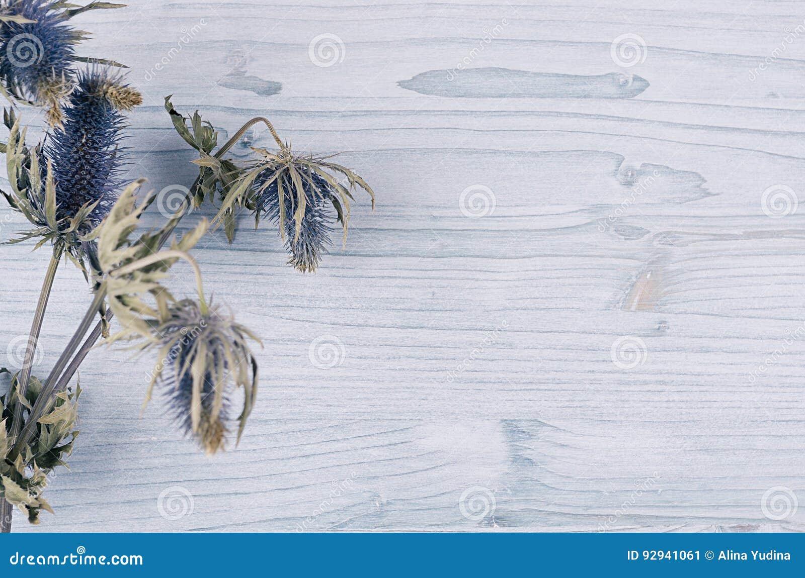 Dry Blue Flower On Light Soft Blue Wooden Board Decorative Spring