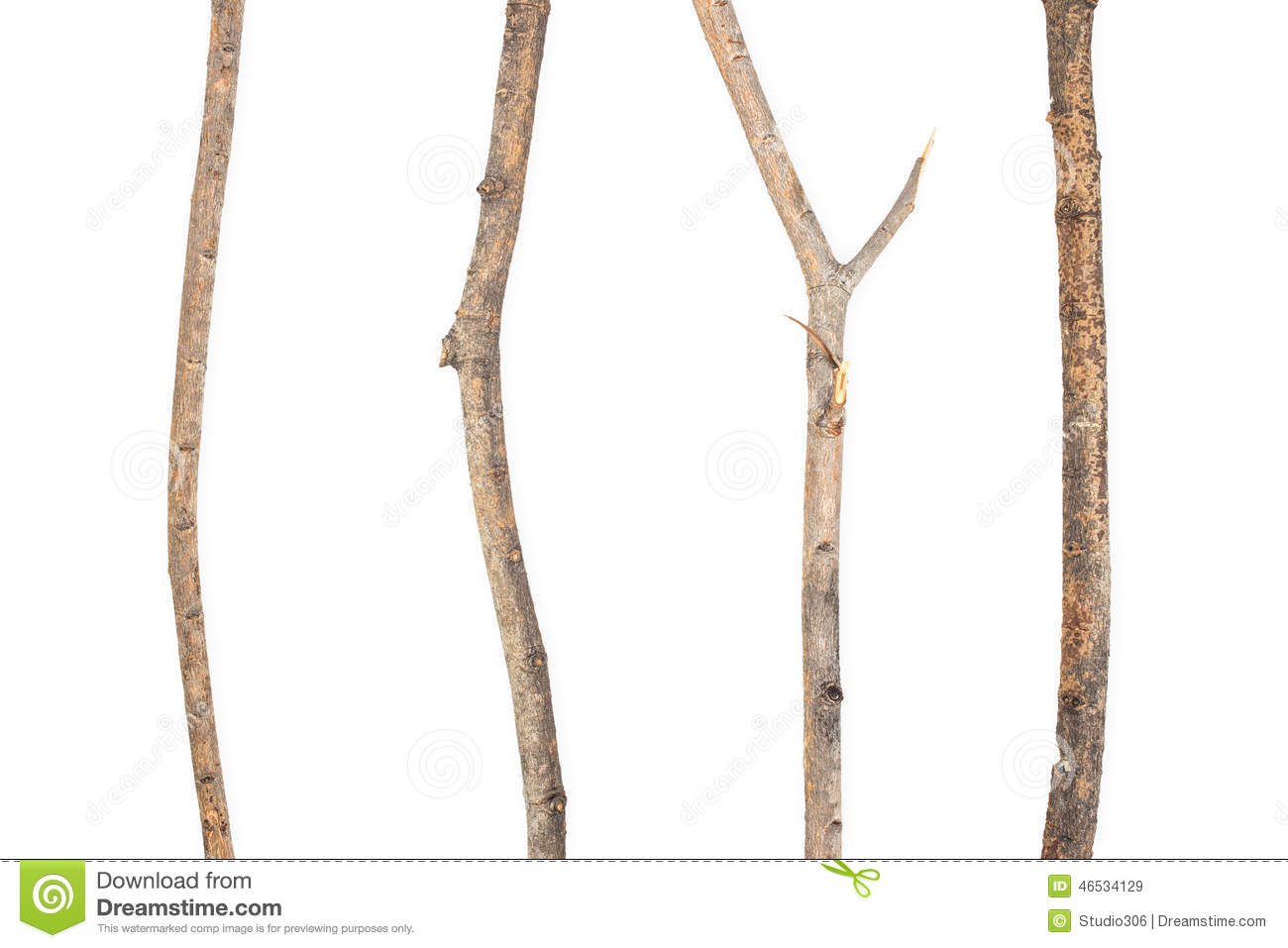 Dry branch stock image. Image of isolated, structure ...