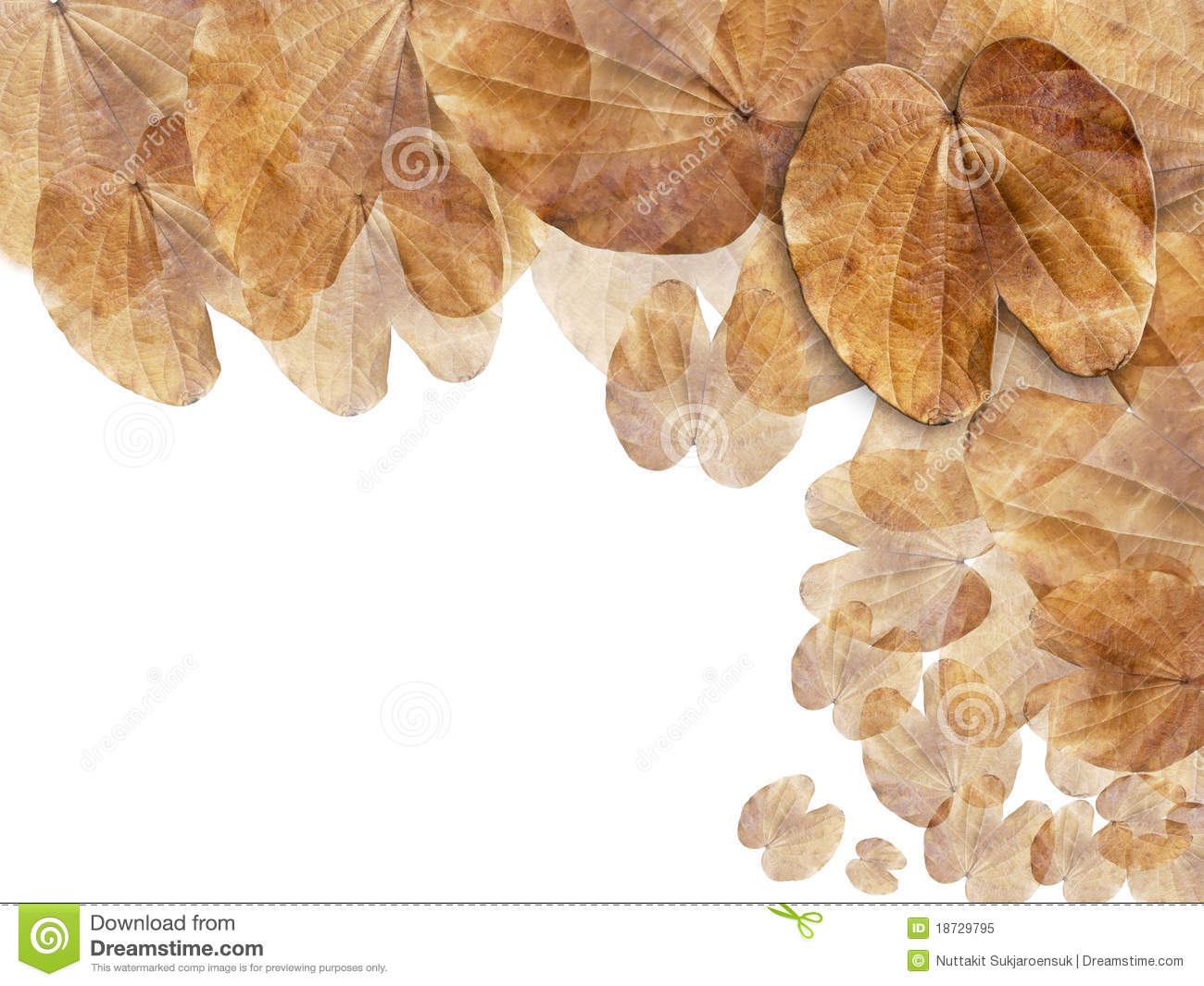 Dry Brown Leaf Web Page Background Royalty Free Stock