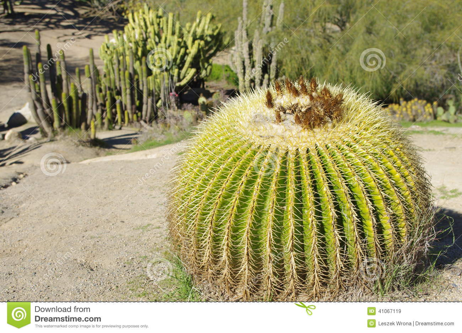 Dry Cactus Garden Stock Image Image Of Cacti Southwestern 41067119 - Cactus-seco