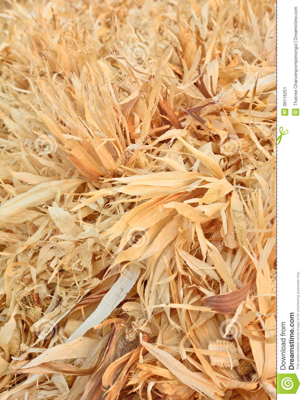 Dry corncobs and corn leaves
