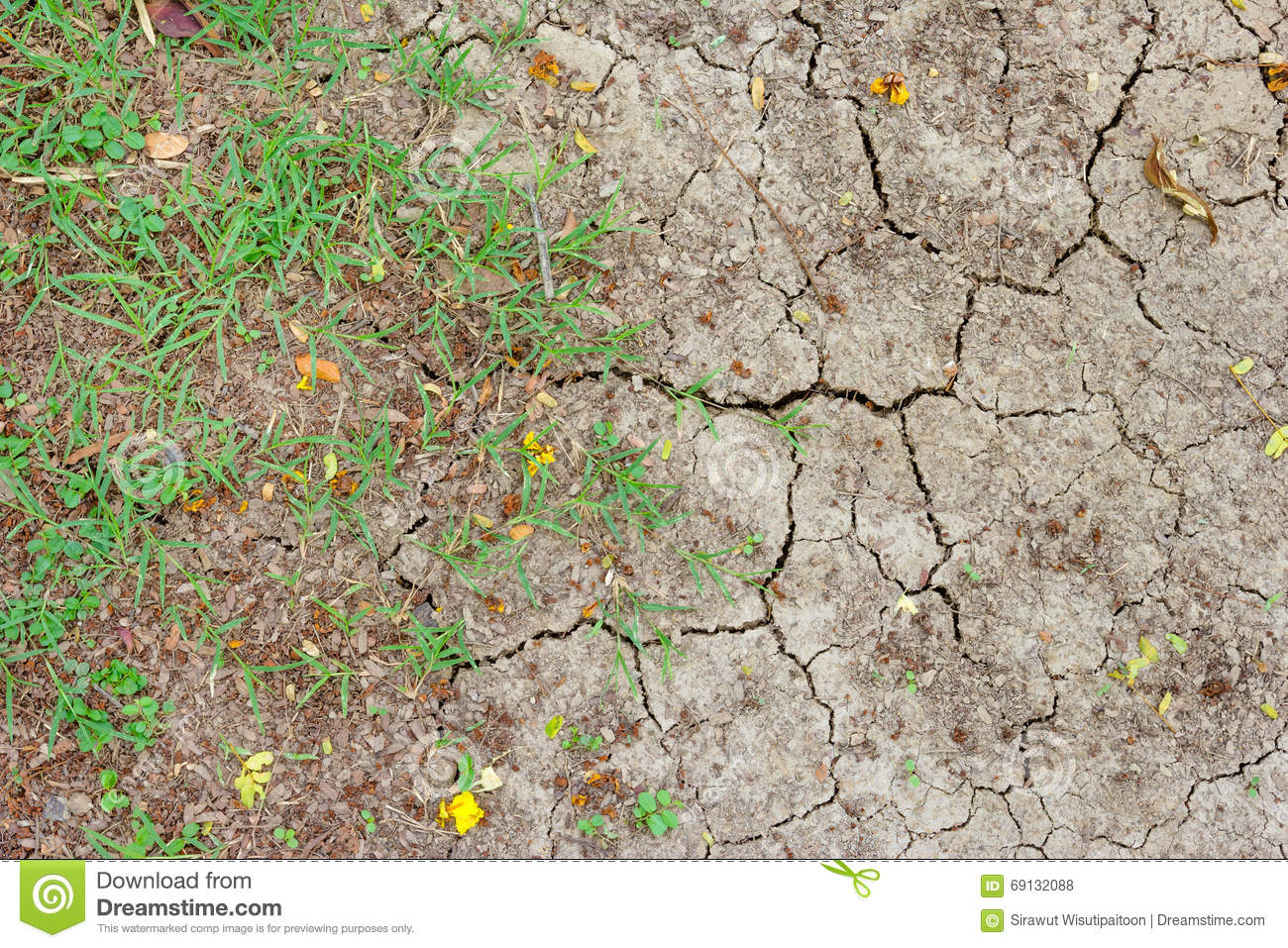 Dry and crack soil with green grass stock photo image for Soil and green