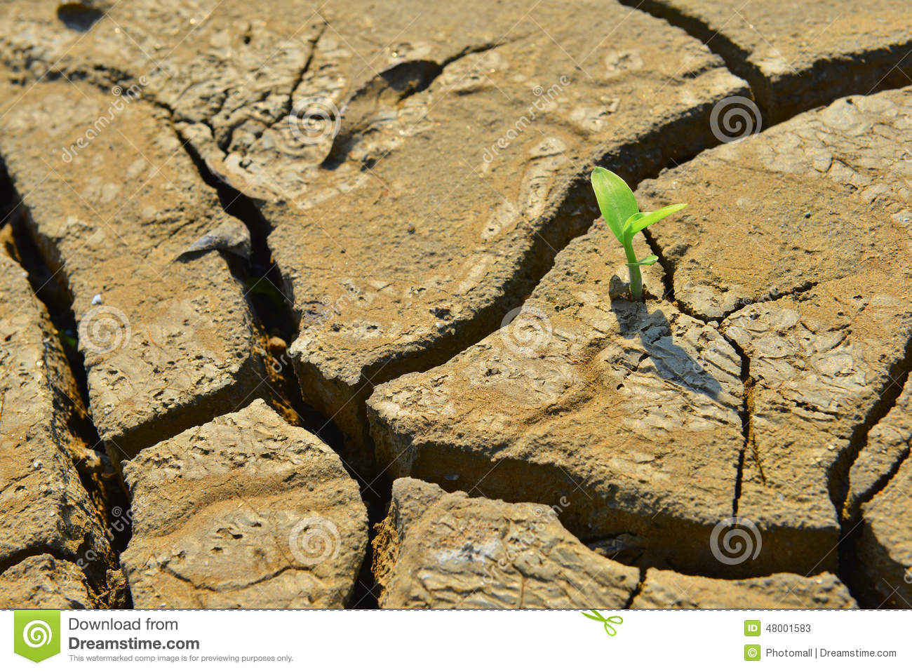 Dry cracked land green shoot,pollution land adversity heal the world new hope life protect environment