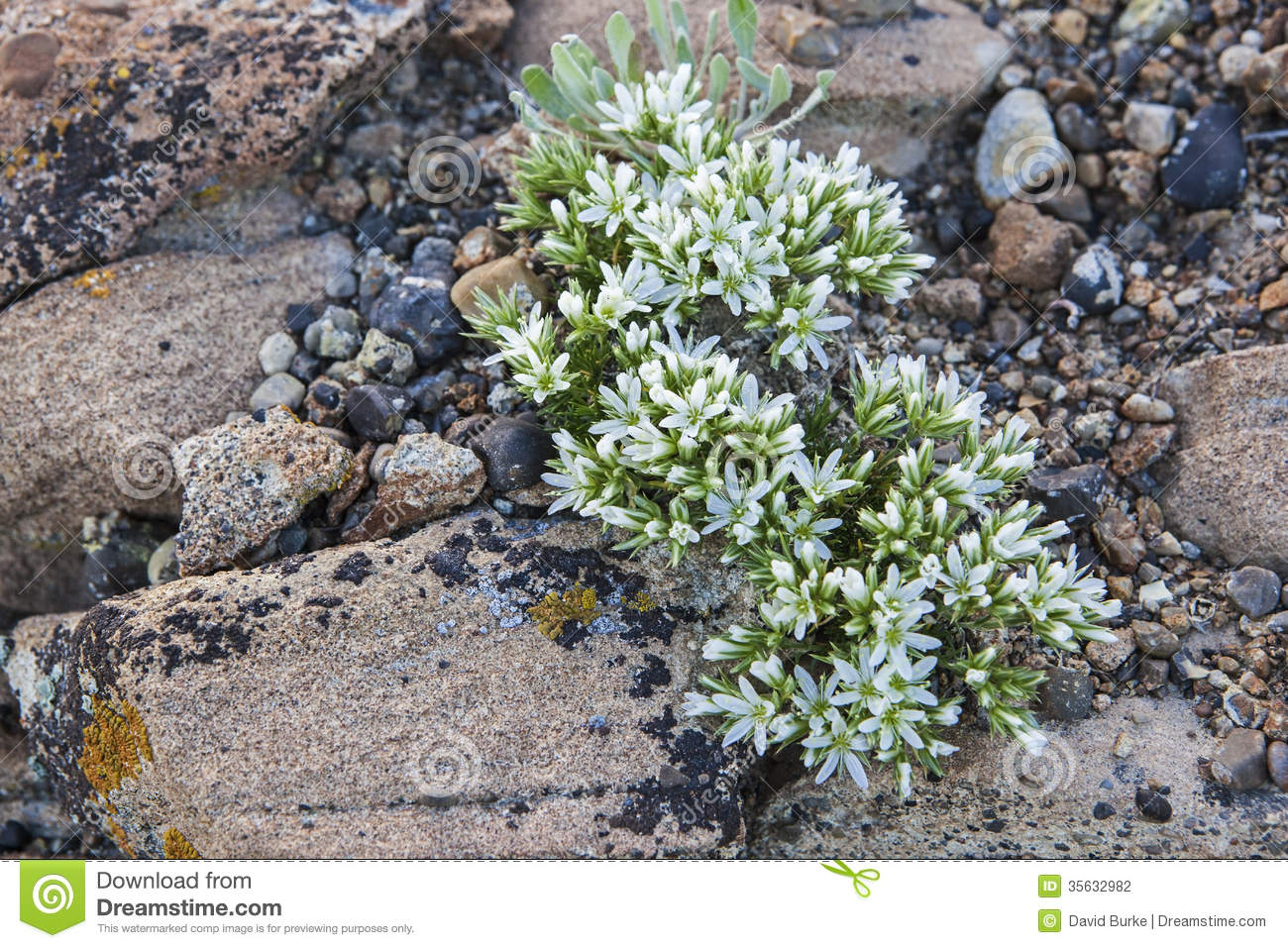 Dry Desert Wildflower Stock Photo Image Of Geologic 35632982
