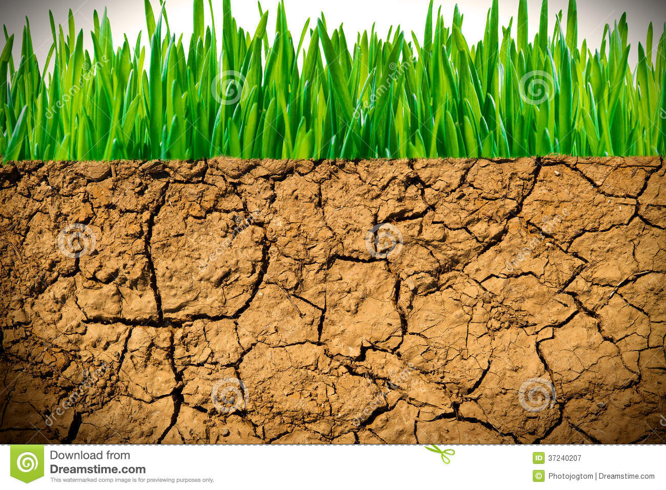 how to prepare soil for grass