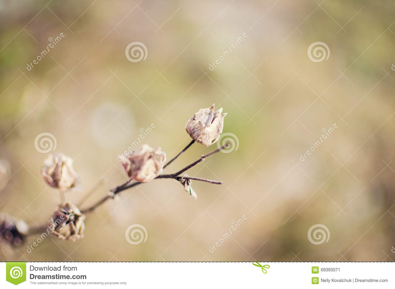 Dry Flower Background Stock Image Image Of Focus Bouquet 69393071