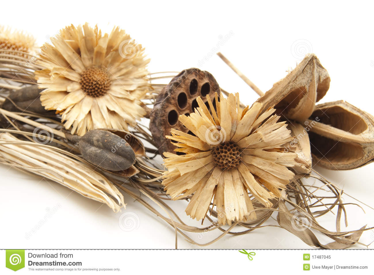 Dry Flowers Royalty Free Stock Photo - Image: 17487045