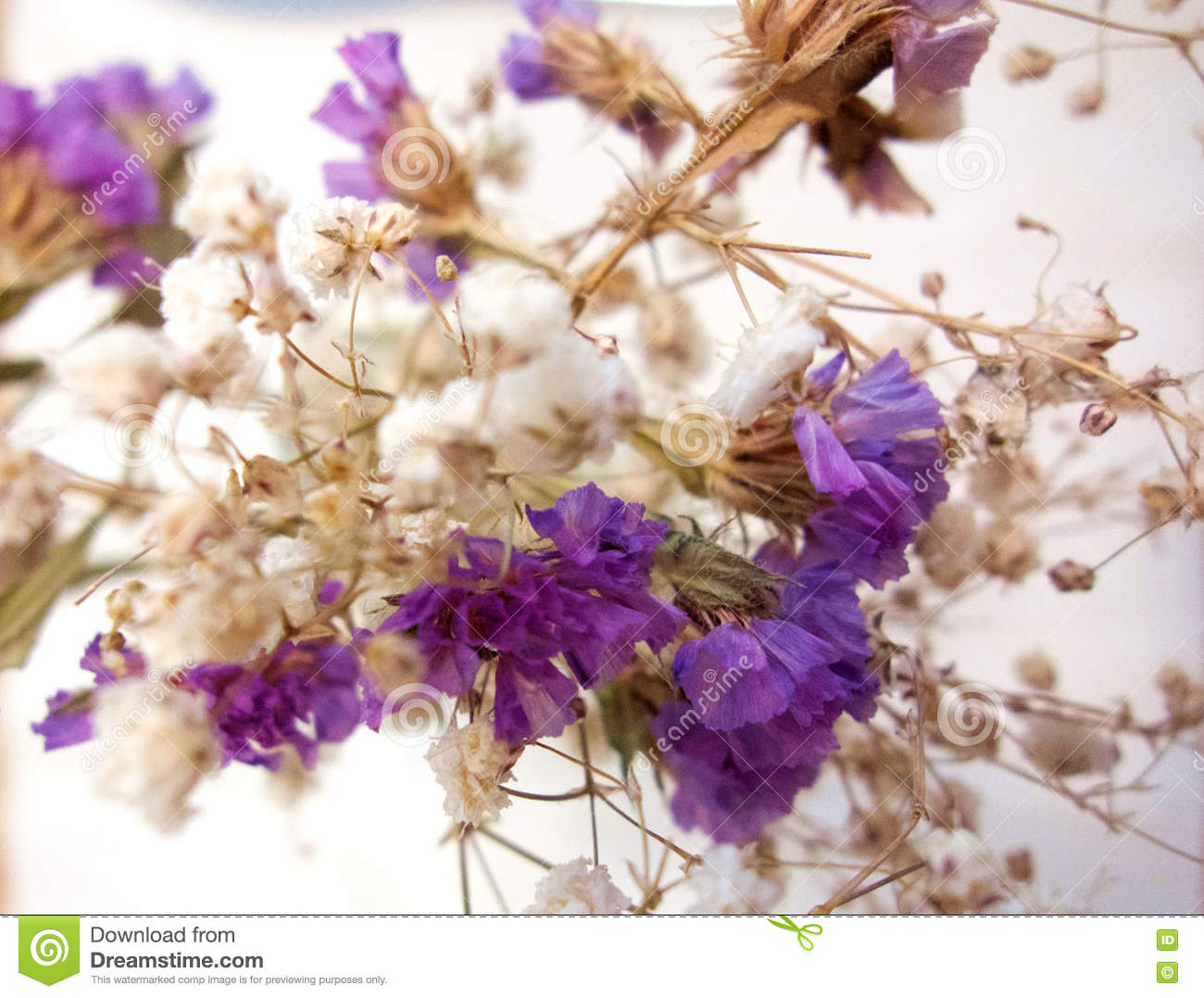 Dry Flowers Closeup Stock Photo Image Of Baby Flower 80725596