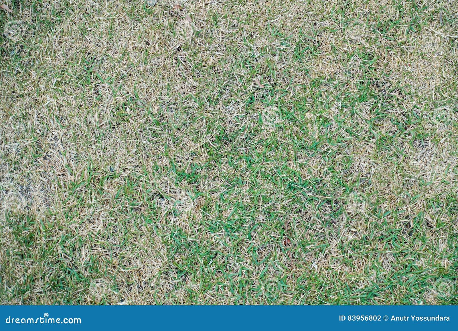 dry grass field background. Dry Grass Field Ground For Texture Background. Background G