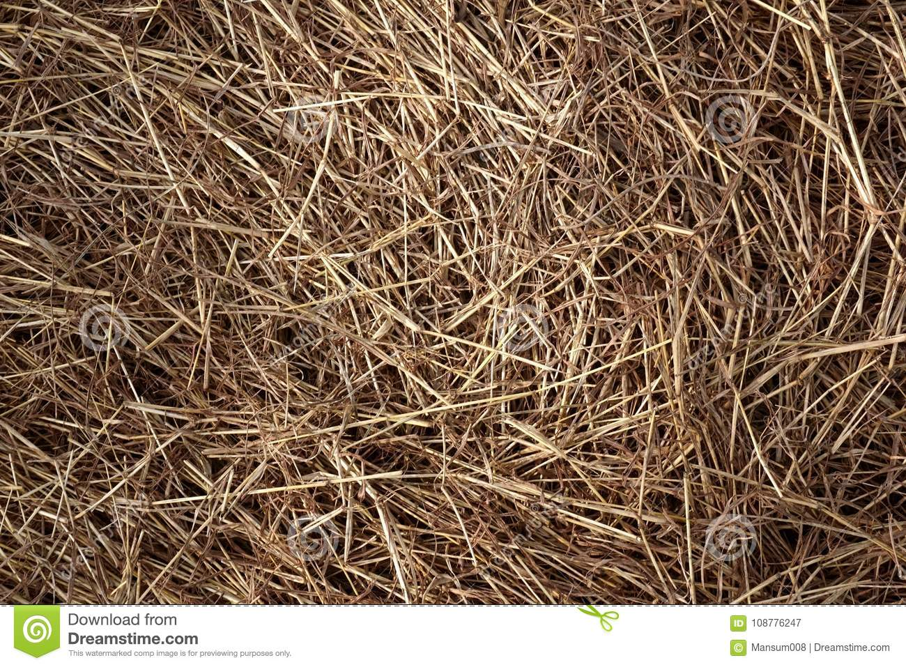 Dry grass texture stock image  Image of sere, natural