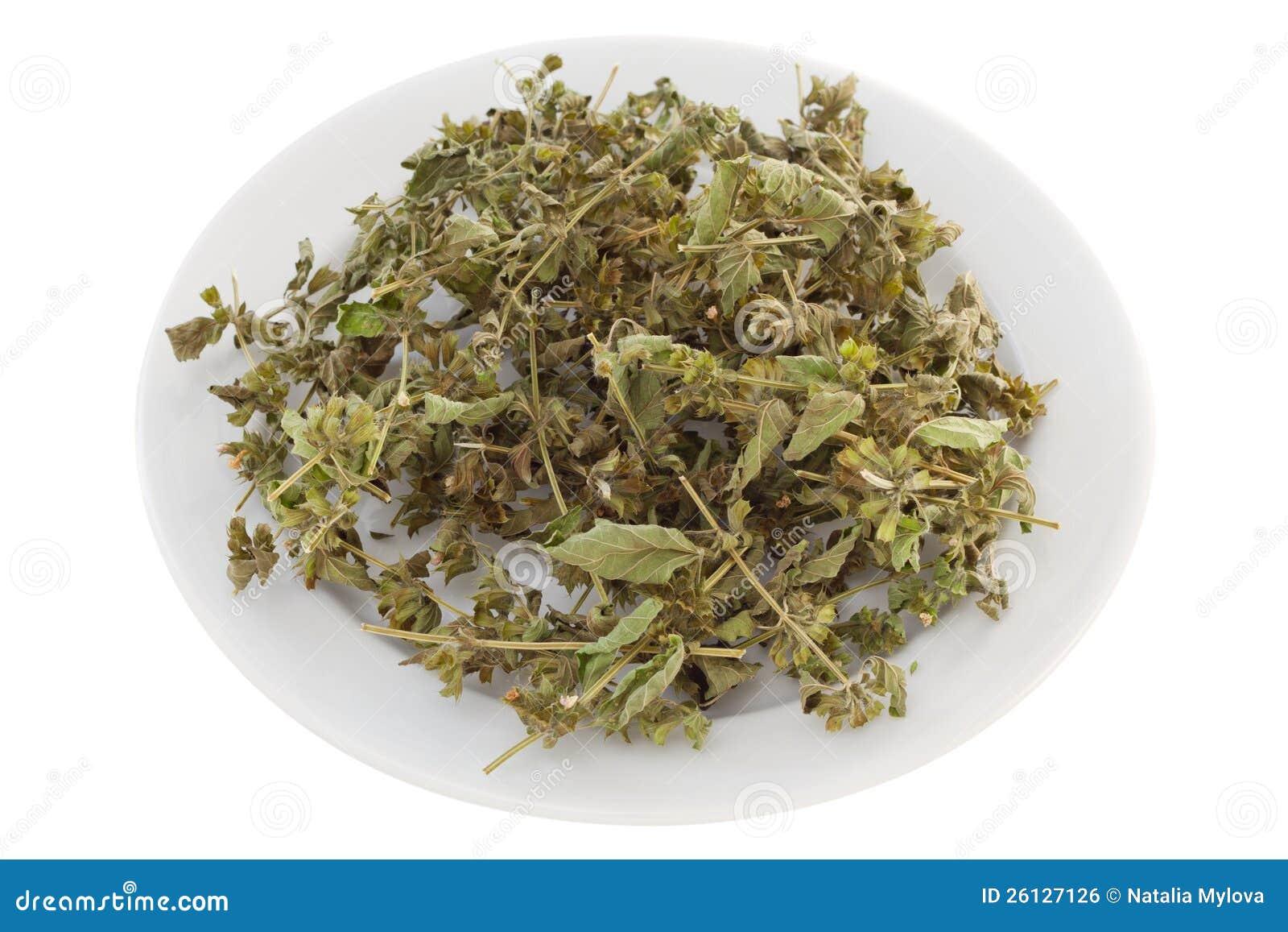 herbal tea business plan