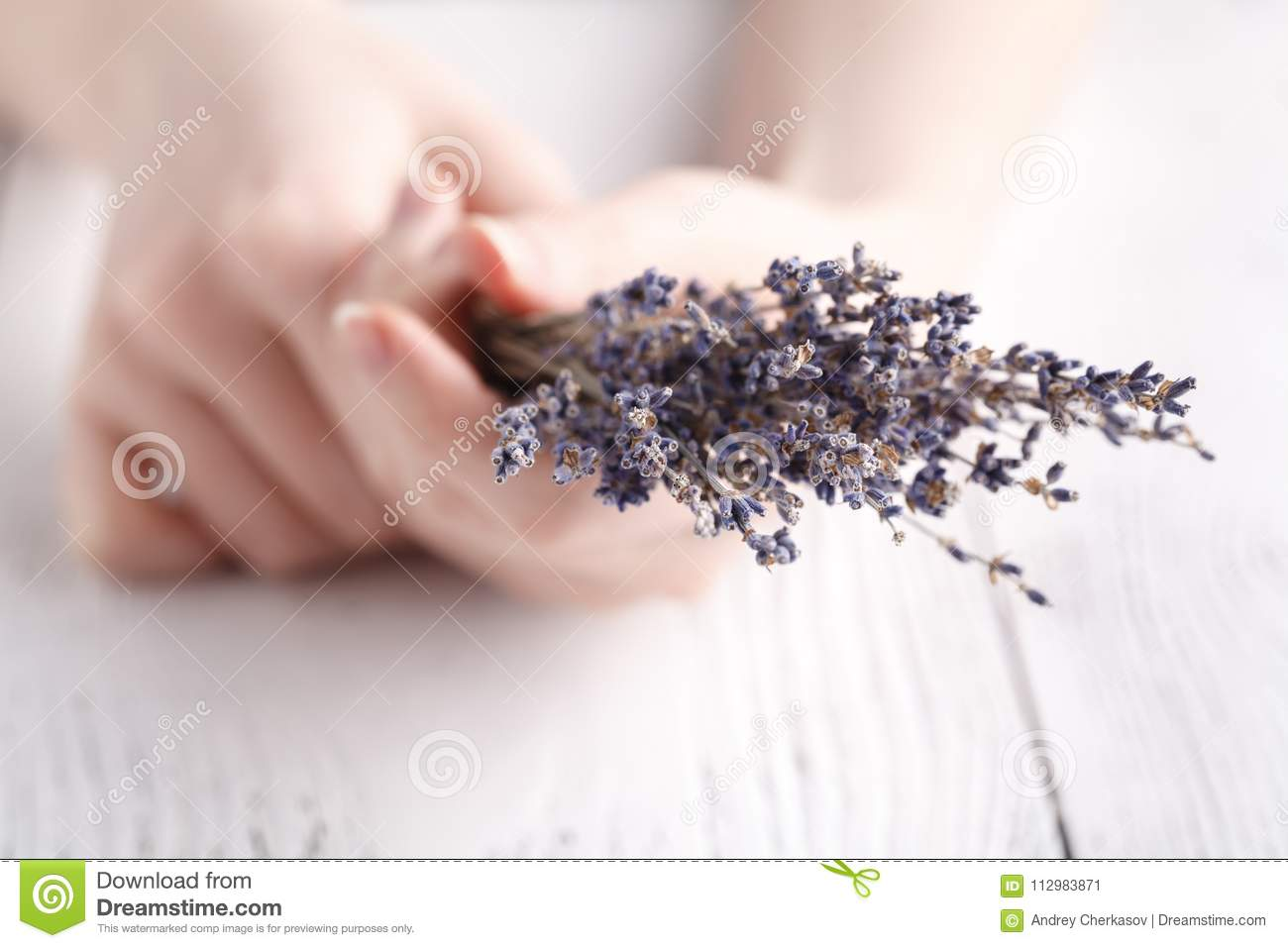 Dry lavender in female hands