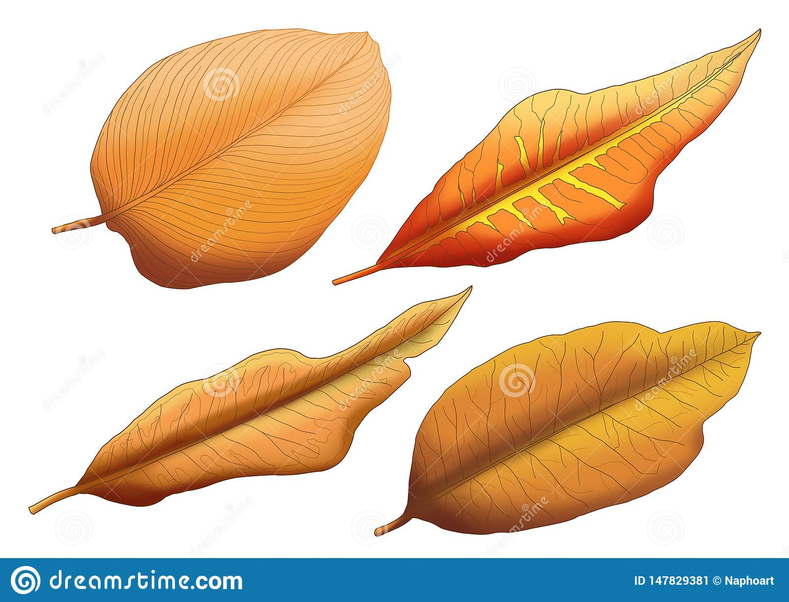 Dry leaf Brown paint stock illustration  Illustration of