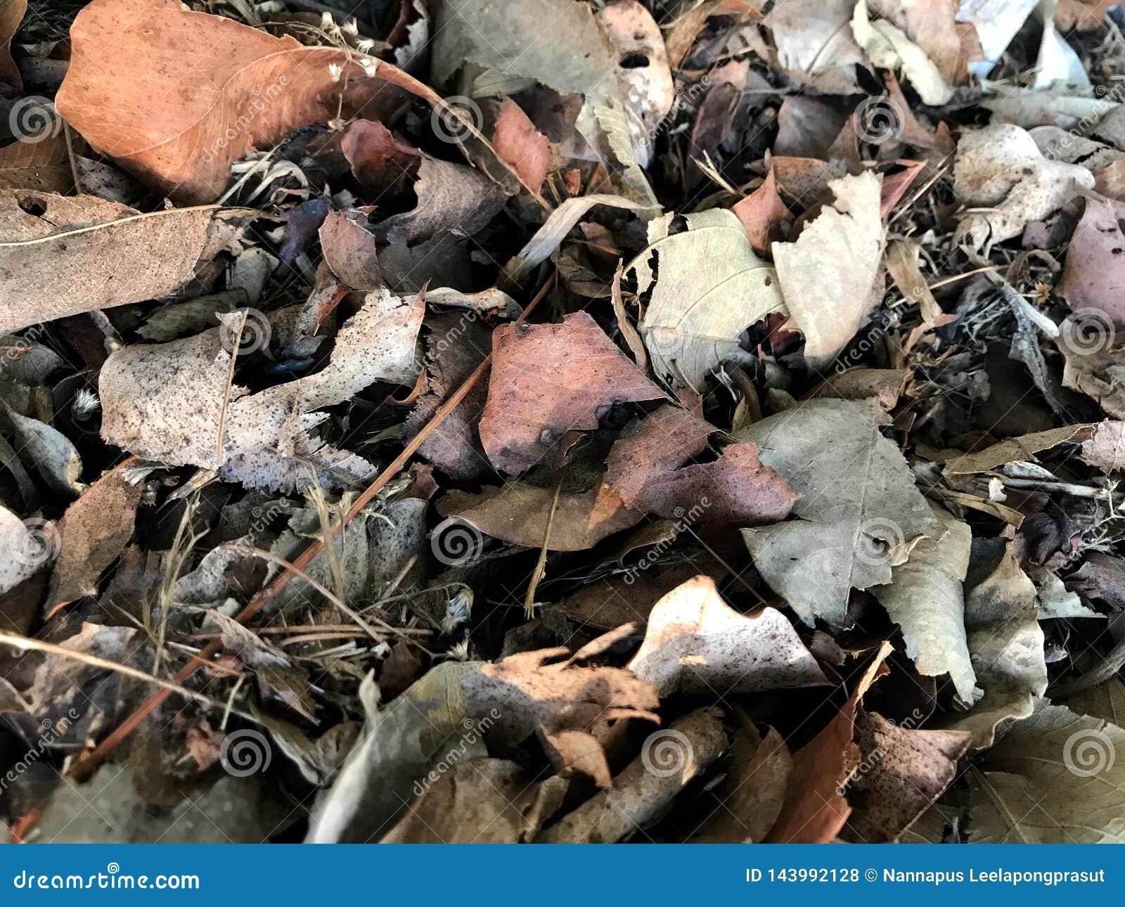 Dry leaf dead leaves plant ground